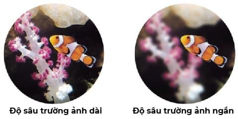 Kính lúp nha khoa lupa bioart